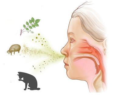 препараты от аллергии зиртек